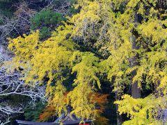 京都を歩く(102) 岩戸落葉神社 「落葉」の名を持つ神社は銀杏の落葉に埋もれていました