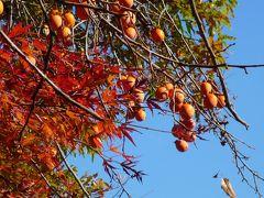 ギリギリセーフ、京都の紅葉 Part3