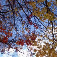 名残の紅葉を愛でませう 香嵐渓と足助城