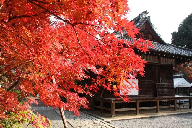 京都には紅葉の素晴らしい社寺がたくさんありますが、今日は拝観料が要らない紅葉の名所をご紹介します。<br />その分お賽銭を弾みましょう。最初にご紹介するのは赤山禅院(せきざんぜんいん)です。<br />修学院離宮近くの閑静な地にある赤山禅院は、平安時代に慈覚大師 円仁の遺命によって創建された、比叡山延暦寺の塔頭です。 本尊の赤山大明神は、陰陽道の祖神とされる中国の神 泰山府君で、京都御所の表鬼門を守護しています。鬼門除けの猿が知られ、方除けのお寺として信仰されています。<br />比叡山の千日回峰行を修めた大阿闍梨により「八千枚大護摩供」「ぜんそく封じ・へちま加持」「珠数供養」をはじめとする加持・祈祷が行われています。<br />禅華院は修学院離宮前にある臨済宗大徳寺派の寺院。いわゆる観光寺院ではありません。