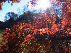 2011.12.17 新宿御苑は、紅葉の盛りでした。