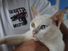 2011年10月/タイ/No.4 - おまけの1日でサムットソンクラームへ