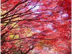 新宿御苑 紅黄葉散歩 2011