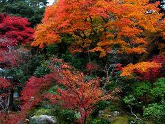 2011年京都の紅葉に行ってきました(実相院、西本願寺)
