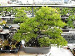 高松盆栽の郷