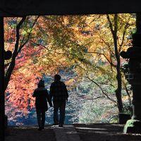 今年最後の紅葉は「香嵐渓」