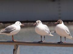 横浜市内の野鳥・自然・風景など 2011年3月から12月