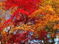 京都錦秋-9 嵯峨野・嵐山公園辺りを散策 ☆トロッコ列車は大盛況