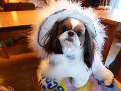 白い樹氷の軽井沢で優雅なリゾート♪ Vol2(第2日目:朝) ☆軽井沢プリンスホテル・ドッグコテージで愛犬と一緒に優雅な朝食♪