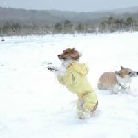 犬連れ雪遊び&のんびり温泉*レジーナの森・年越しキャンプ(1)