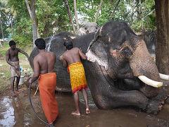 南インド旅行記2011-2012 ムンバイ~コーチン編