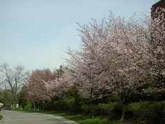 5月の札幌中島公園