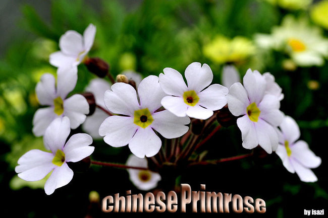 2012 新春の花フェスタ記念公園(1)から<br />http://4travel.jp/traveler/isazi/album/10636425/<br /><br />今回は、日本庭園にロウバイが咲き始めてと聞いて<br />2週間ぶりに花フェスタ公園に立ち寄りましたが<br />今にも雨が降りそうなのか、早春の寒さか、花が咲かないか、<br />今の時期は、観客がほとんど見受けられない・・・。<br /><br />花の少ない季節に咲く、ロウバイは・・うれしい花です。<br />ロウバイを追いかけるが期待外れで<br />園内を散策して、プリンセスホール雅で小雨が降り<br />急いで、花の地球館で前回同様に水仙を撮り<br />花の地球館フラワーショー「スプリング メドーショー」開催中<br /><br />帰るように、花トピアへ回り<br />ホールにて花づくりや花飾りを見て帰る。<br /><br /><br />http://4travel.jp/domestic/area/toukai/gifu/minokamo/kani/travelogue/?trip_year=&trip_theme=&trip_group=&sort=vote