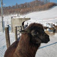 冬の北海道2012(名寄と剣淵1.20)