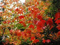 紅葉のカナダクルーズ  � バー・ハーバーの観光  �