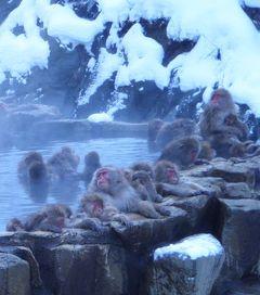 20111229-0103 年末年始一人旅(8) 3日目-2 地獄谷野猿公苑