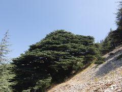 友人を訪ねて 贅沢なヨルダン・レバノン旅行記5日目(レバノン杉林ハイキング)