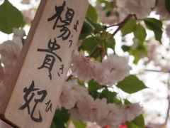 春爛漫の大阪キタ・奈良・橿原今井町を歩く