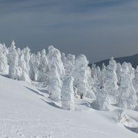 快晴の宮城蔵王の樹氷