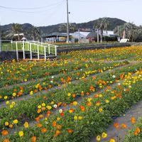南房の花を見に 館山ファミリーパークと南房パラダイスを訪ねる旅