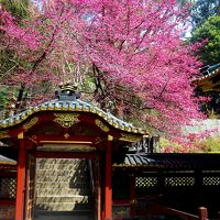 家康の愛した東海道の要所、駿府の風(久能山東照宮と日本平)