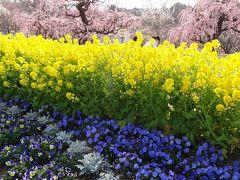 寒い寒い冬を抜けて、、、やっとこさ春の訪れ♪静岡・掛川・浜松でのお花見