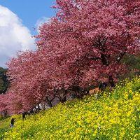 みなみ桜と菜の花まつり・・・下賀茂温泉道の駅「湯の花」