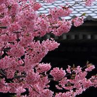 静岡 伊豆 松崎町歩きと下賀茂の夜桜