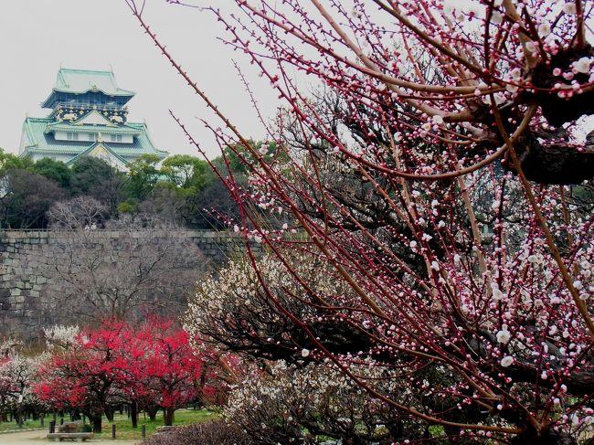 大阪への出張で、朝に大阪城の梅園を訪問しました。<br />あいにく天気は余りよくなかったのが残念です。