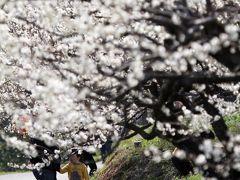 Solitary Journey [1004] 約1万3千本の梅の花が22haのやわらかい山肌を覆っていました。<牛尾梅林・うめまつり>佐賀県小城市