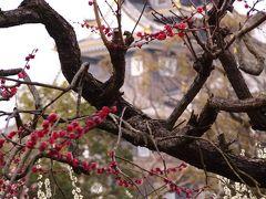 満開の梅の「後楽園」より「岡山城」を望む