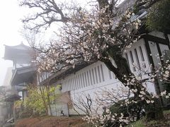 箱根で温泉(2)--温泉人