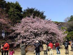 新宿御苑に桜のチェックに出かけてみました