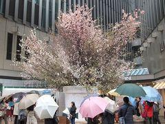 有楽町 LUMINEの桜イベント