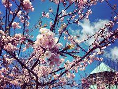 自然がいっぱい!春の富浦ハイキング/日帰り