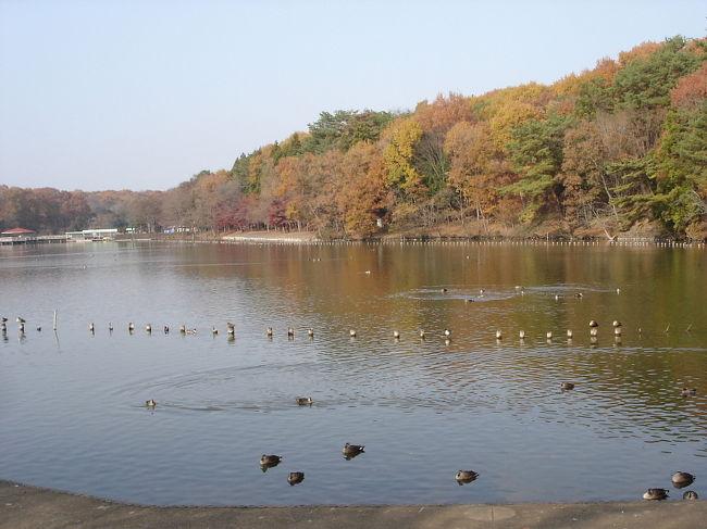 一年ぶりに井頭公園でバードウォッチングを楽しみました。<br />まだ紅葉が残っておりきれいな紅葉も楽しめましたが、来園者が多かったせいか肝心の鳥さんの方はイマイチ出てくれませんでした。<br />全般に小鳥の冬鳥の出足が遅れているとの情報もあり、小鳥類はほとんど見られませんでした。<br /><br />表紙写真は、井頭公園の風景。<br /><br />※ 2017.02.06 位置情報登録