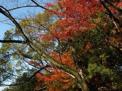 秋の八幡散歩~02石清水八幡宮参道の秋
