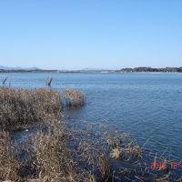 涸沼でバードウォッチング [2011](1)