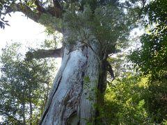週末に屋久島で「もののけ姫の森」を訪れる旅(2)2日目は白谷雲水峡で山道を登ったり下ったり