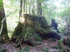 週末に屋久島で「もののけ姫の森」を訪れる旅(1)1日目はヤクスギランドと滝を堪能