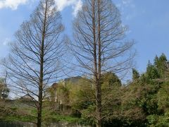 春の陽気に誘われて桜の下見 → 4月7日現在の桜情報追加 【佐倉市民の憩いの場、上座総合公園】