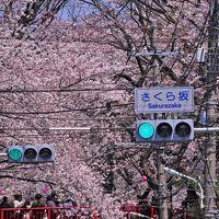 桜坂♪ 灯台下暗し・・であります