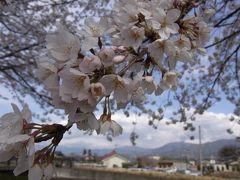 信玄公祭り 輝きの祭典 大宝飾展2012★アイメッセ山梨の桜と山梨プチグルメ