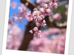 桜祭ジャパンフェアー@バンデューセン植物園 in バンクーバー