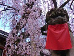 「そうだ奈良へ行こう」まほろばの桜に心奪われて ~ 氷室神社・法華寺・佐保川 ~