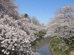 子どもと一緒に行く、各務原・新境川堤の桜並木