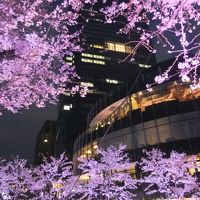 2012東京都内花見巡り