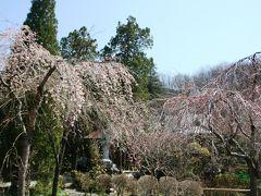 桜の花を求めて埼玉県長瀞と秩父へ