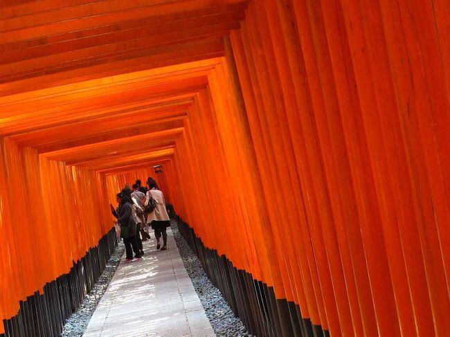 (写真は伏見稲荷/千本鳥居)<br /><br />昨年12月、京都の紅葉にはえらく感動いたしました。そこでぜひ春の桜を観に来ようと決めておりました。<br />「京都の秋 http://4travel.jp/traveler/janal/album/10626685/」<br /><br />いつもの通り、往きは夜行バス、市内で2泊し、帰りは新幹線となりました。京都の桜は3〜7分咲きといったところでしょうか。<br /><br />しかし東京に戻ればなんと桜は満開とはなんたること。<br />桜だけに限定すれば、東京のほうがはるかに名所がたくさんありますが、そこはなんといっても京都、桜以外にも見どころいっぱいです。欧米や中国の観光客も大分戻ってきているようです。<br />なお開花は紅葉とは逆に洛南、洛中に始まり、東に西に、そして洛北に到ります。 京都の桜はいま始まったばかりです。<br /><br />・咲かぬなら咲かせてみたい今日桜   <猿お方>   <br />・京に来て酔うに酔えない今日の宵   <ナヤ美><br /><br />しかし、京都は何を食べても美味しいところですね。<br /><br />予算は交通費:約2万円(高速バス/新幹線/市内バス・地下鉄2日券)<br />   ホテル代:1.3万円(2泊)<br /><br />4月次回は伊豆大島、そして再度ベトナム/ホイアンへ