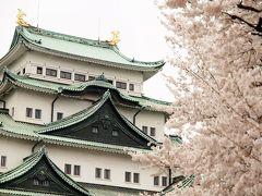 名城公園と名古屋城 満開の桜とチューリップ 名古屋市市政資料館と珈琲ぜんざい たっぷり春を満喫しましょ♪